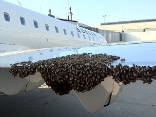 Thousands of Bees Delay Pittsburgh Flight