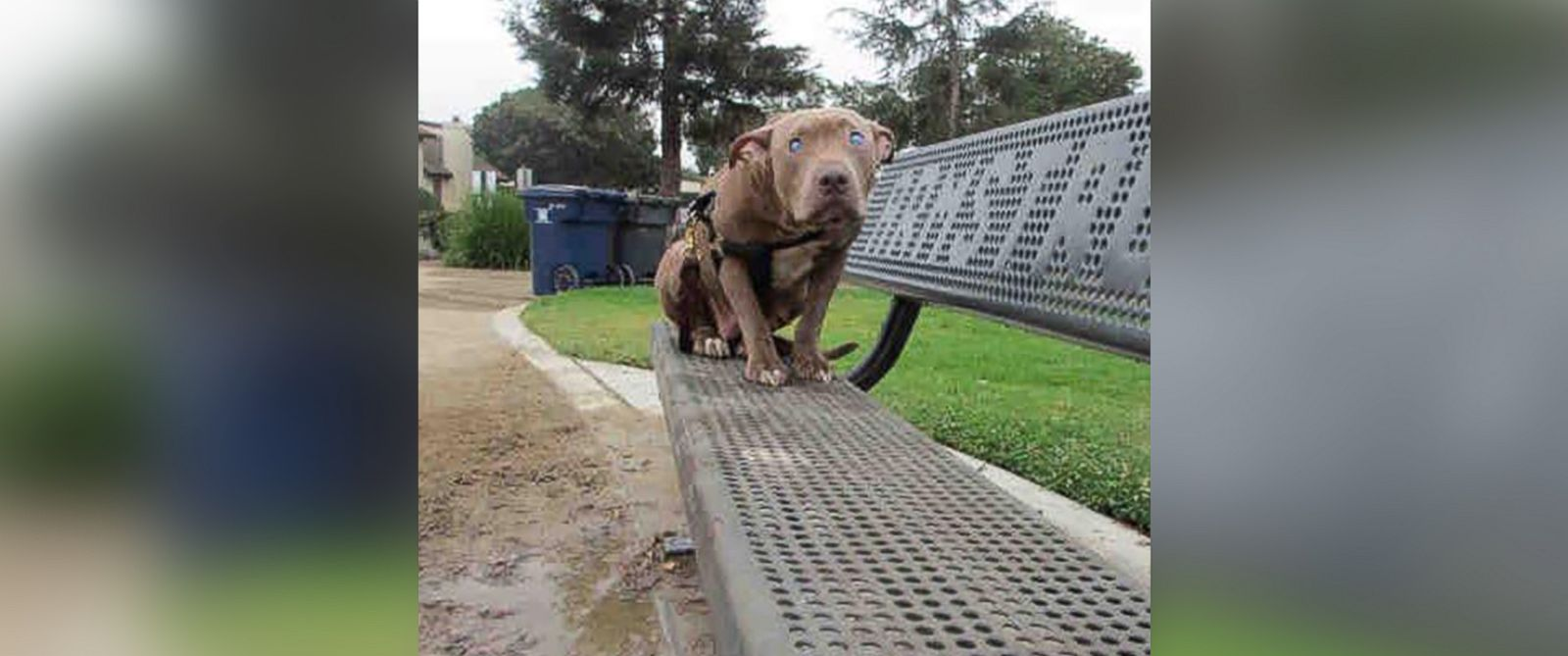 PHOTO: Poly, who is blind, has found love in a foster home after being abandoned on park bench.