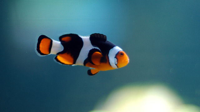 PHOTO: Look for Nemo