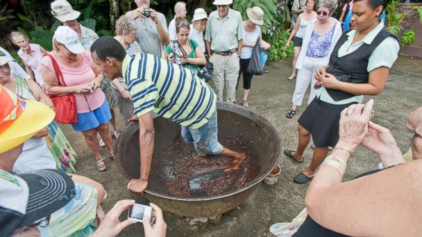 PHOTO: 5. Working Caribbean Cocoa Plantation Fond Doux Holiday Plantation