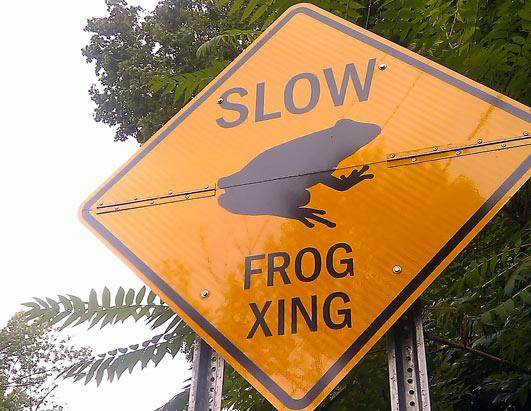 Bizarre Street Signs: Effective or Ridiculous?