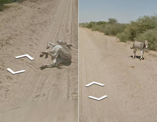 Donkey Dust Bath on Google Street View 