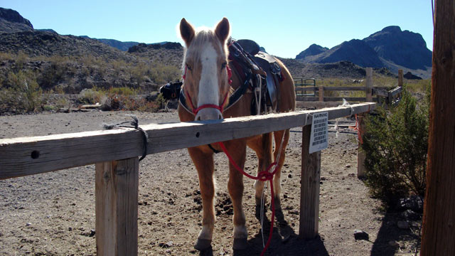 PHOTO: Oatman Stables, Oatman, AZ