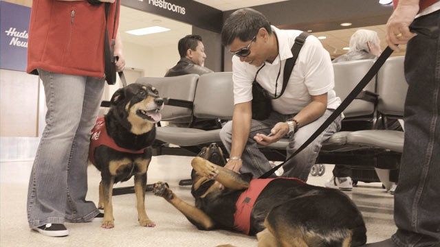 PHOTO: The new PUP (Pets Unstressing Passengers)