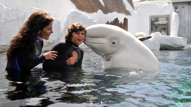 PHOTO: Beluga Interaction Program, SeaWorld