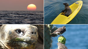 Where Sea Lions are King: Touring the Galapagos Islands