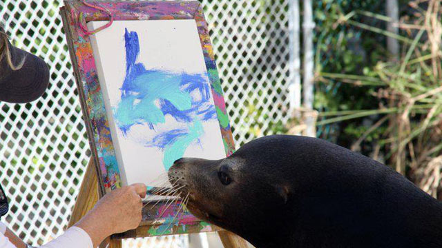 PHOTO: Swim or Paint with Sea Lions