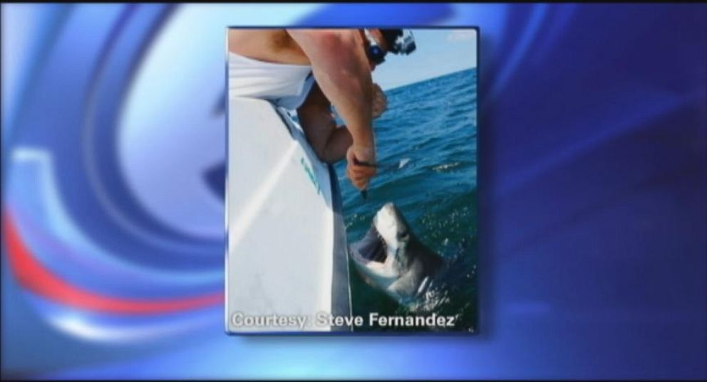 Baby Great White Hooked in Queens