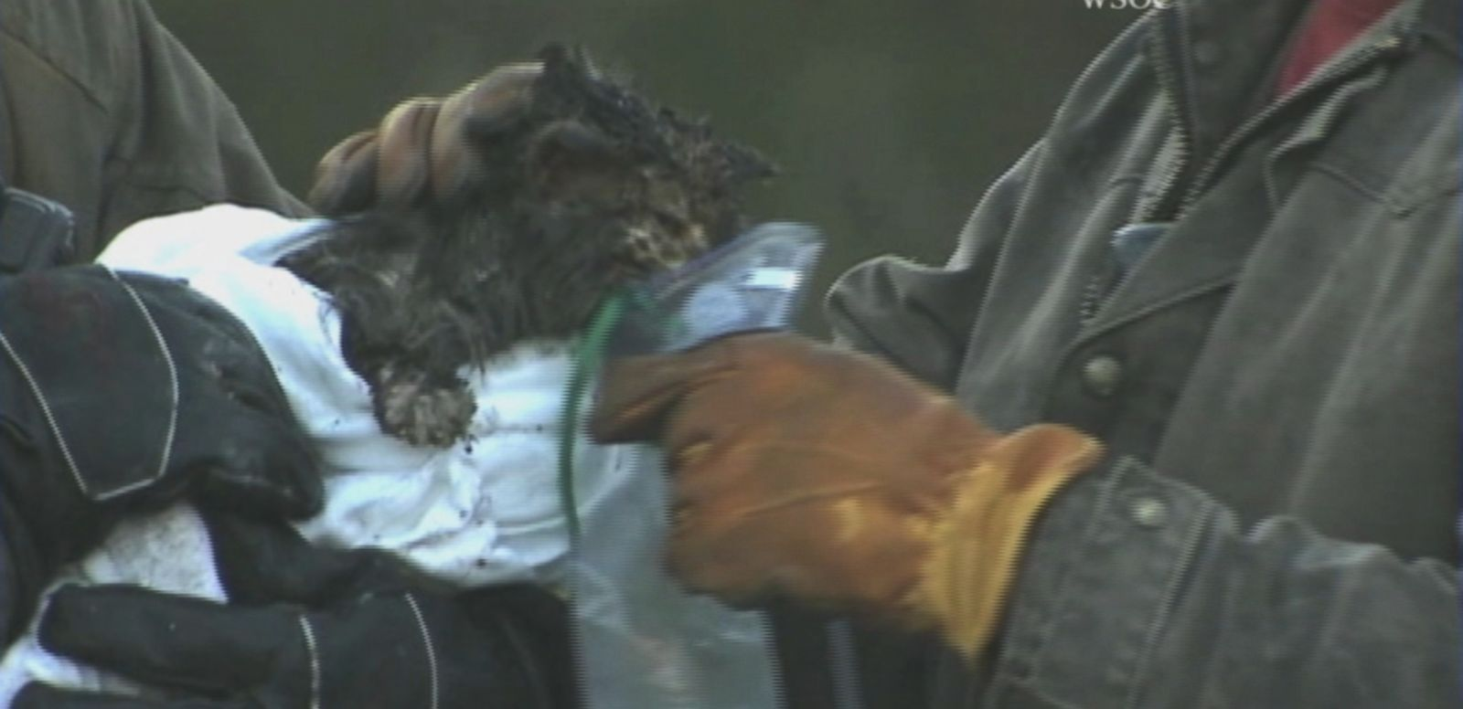 VIDEO: Rescue crews managed to capture the cat that was trapped in the wall of a burning home for three hours.