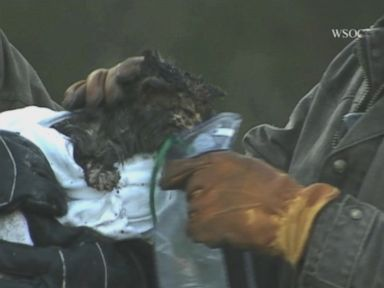 Watch:  Firefighters Rescue Kitty From Inside House Wall