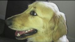 VIDEO: Allison Marks is considering legal action after she says a Virginia Petco groomer left her two year-old golden retriever Colby in a drying unit.