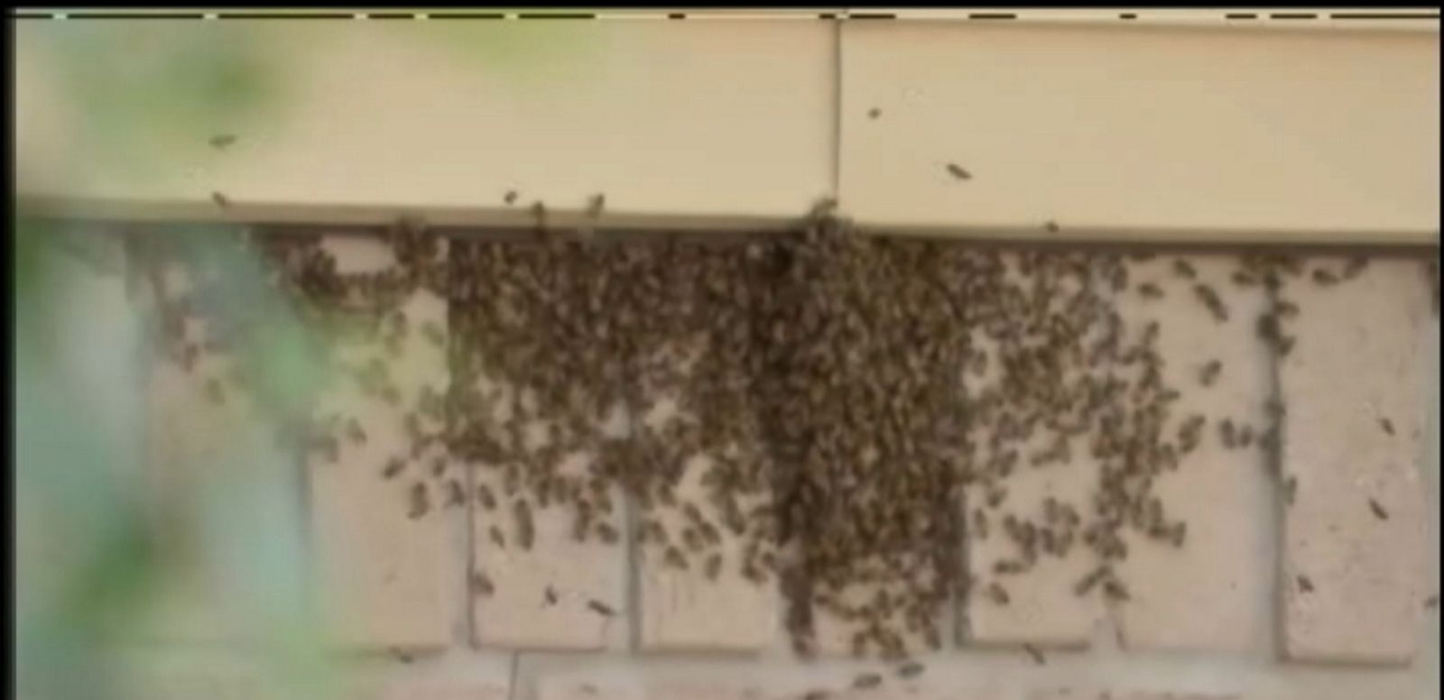 VIDEO: The aggressive colony of bees was exterminated, but a second colony continues to swarm around a vacant home across the street.