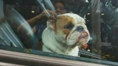 VIDEO: Local business owner Robyn Urman alerted police to the English Bulldog, named Fifi, that was locked in a parked black Mercedes SUV in Tenafly, New Jersey.
