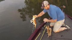 VIDEO: Brandon Key and Jason Frost saved the two orange tabby kittens who swam toward their boat on the Black Warrior River.
