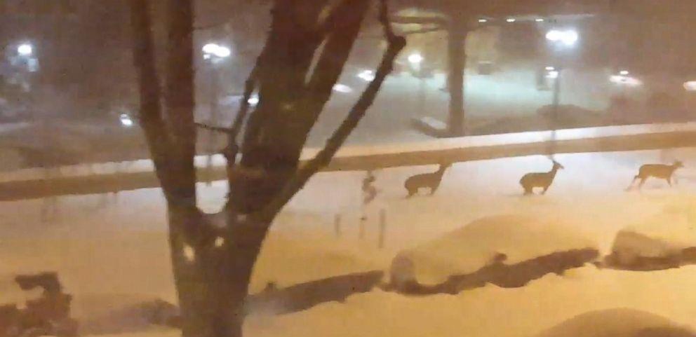 VIDEO: Deer Frolic Through Washington, D.C. Snow