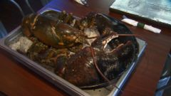 VIDEO: Activists bargained with a Florida restaurant owner to save the 110-year-old crustacean.