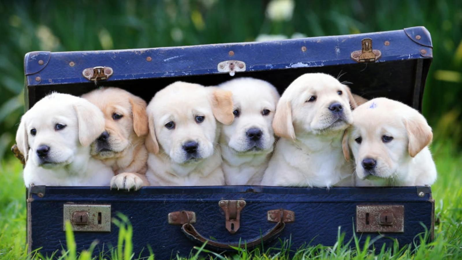 VIDEO: The History of Dogs as Pets