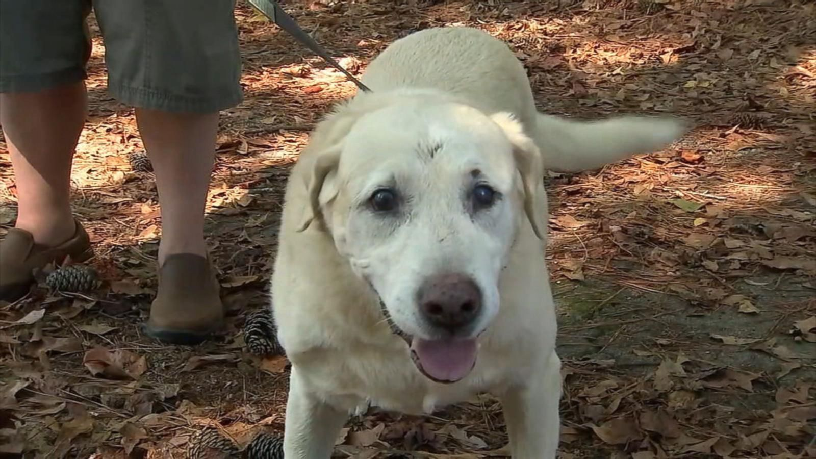 Firefighters worked for several hours to save the Labrador retriever.