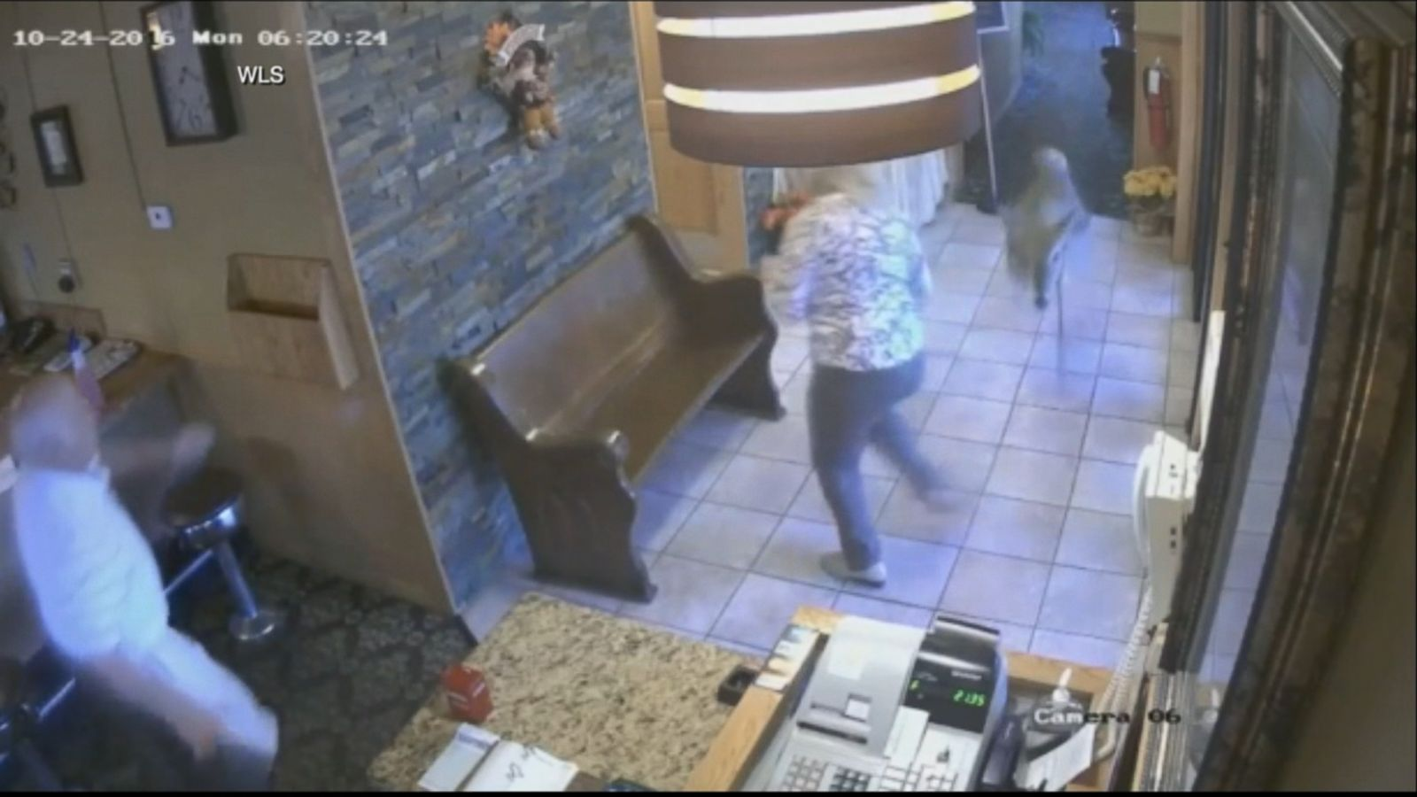 VIDEO: The unexpected dinner guest eventually escaped through a window.