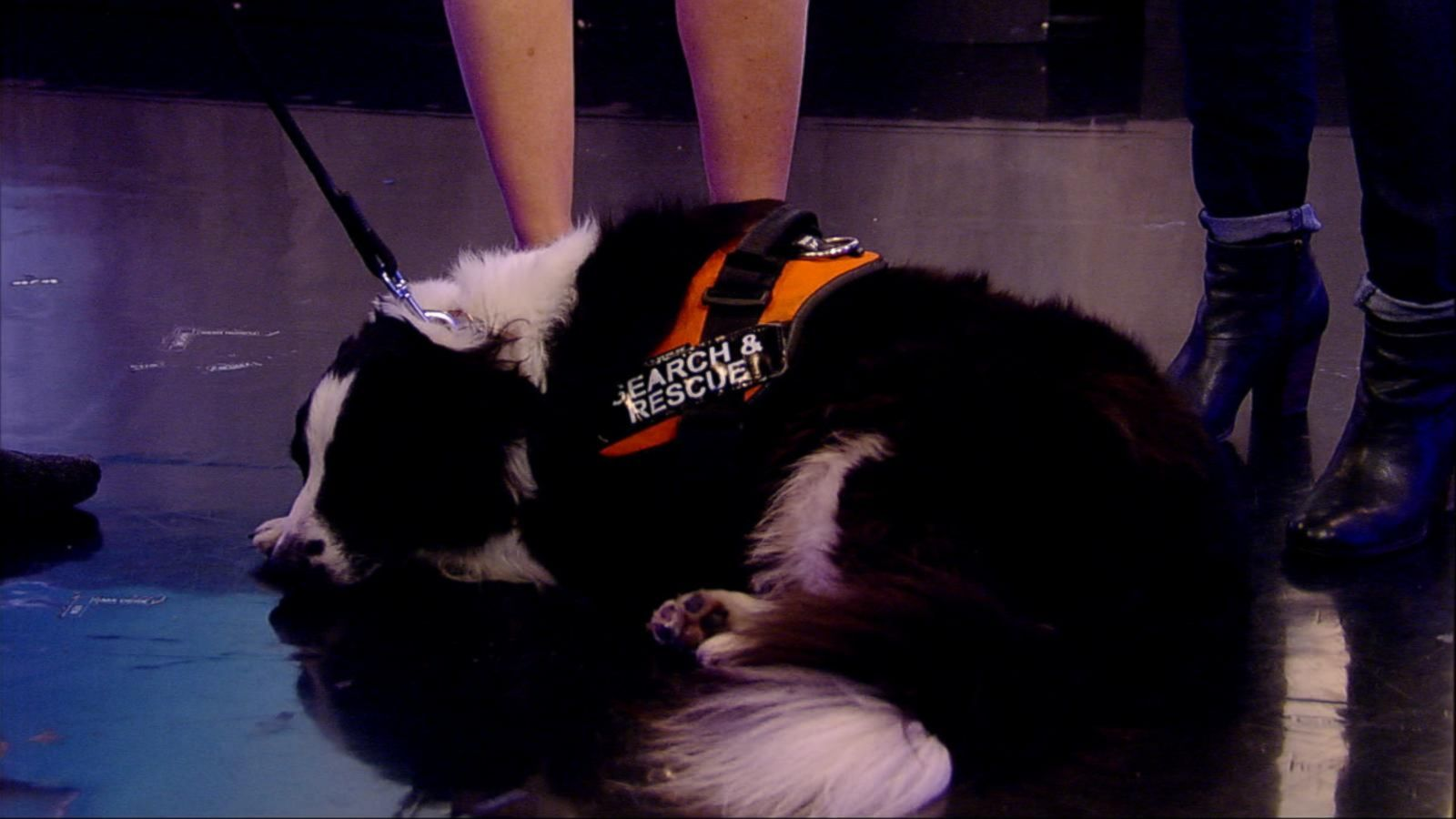 VIDEO: Meet the Heroic Dogs Working to Save Lives