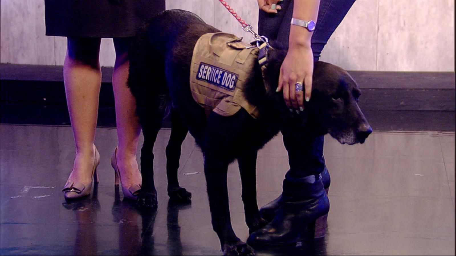 VIDEO: This War Hero is a Bomb Detector With Paws