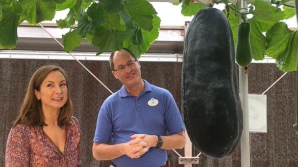 VIDEO: Walking Tour of The Land Pavilion at Disney's Epcot Center