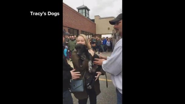 VIDEO: 57 dogs saved from kill shelters meet their new families in touching video
