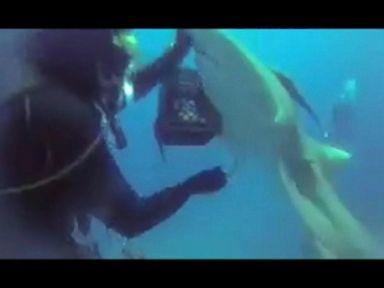 WATCH:  Diver pulls hook from shark's belly