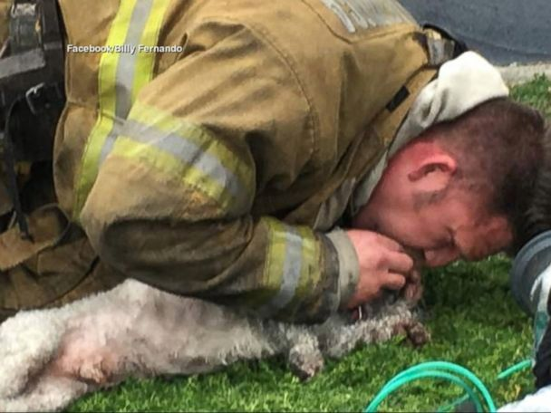 WATCH:  Firefighters revive dog with mouth-to-snout