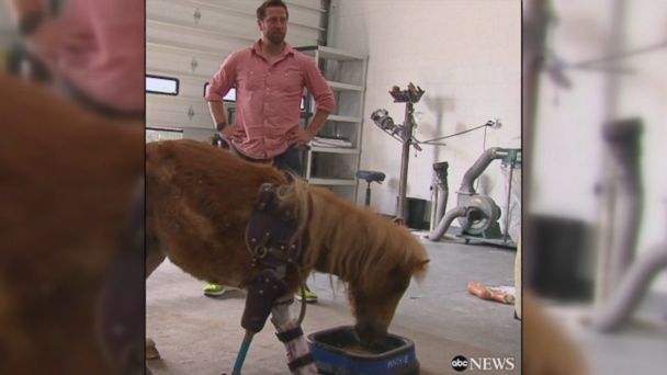 VIDEO: Derrick Campana is helping animals walk again by making low-cost prosthetics for animals in need -- from miniature ponies to goats, dogs and even elephants.
