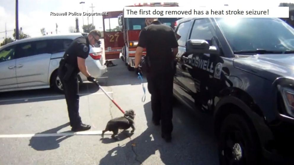 now playing police georgia woman charged after leaving dogs in hot car