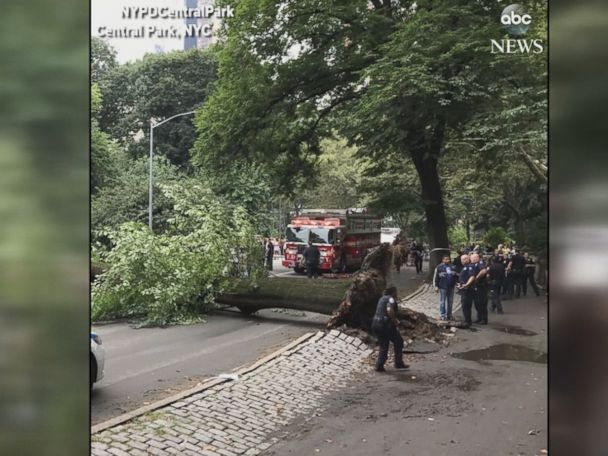 WATCH:  4 injured after huge tree falls in NYC's Central Park