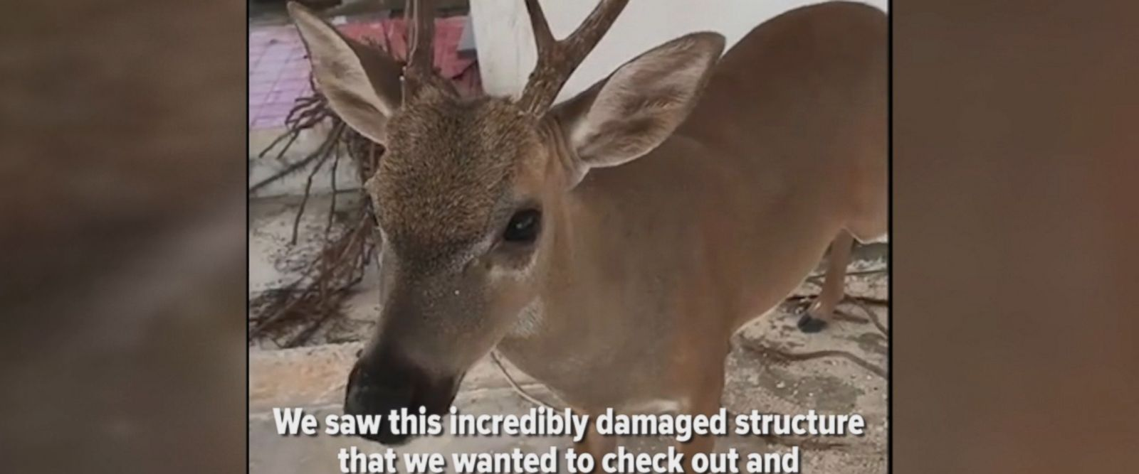 A firefighter in Monroe County, Florida, encountered a dehydrated deer on Sept. 18, and decided to lend a helping hand.