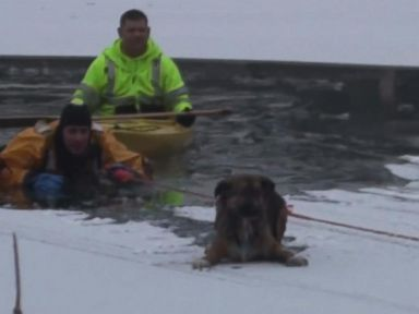 WATCH:  Dog rescued from icy peril on Illinois lake
