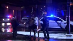 'VIDEO: A cow escaped from a living nativity scene twice in one night.' from the web at 'http://a.abcnews.com/images/US/171214_vod_orig_escaped_cow_16x9_240.jpg'