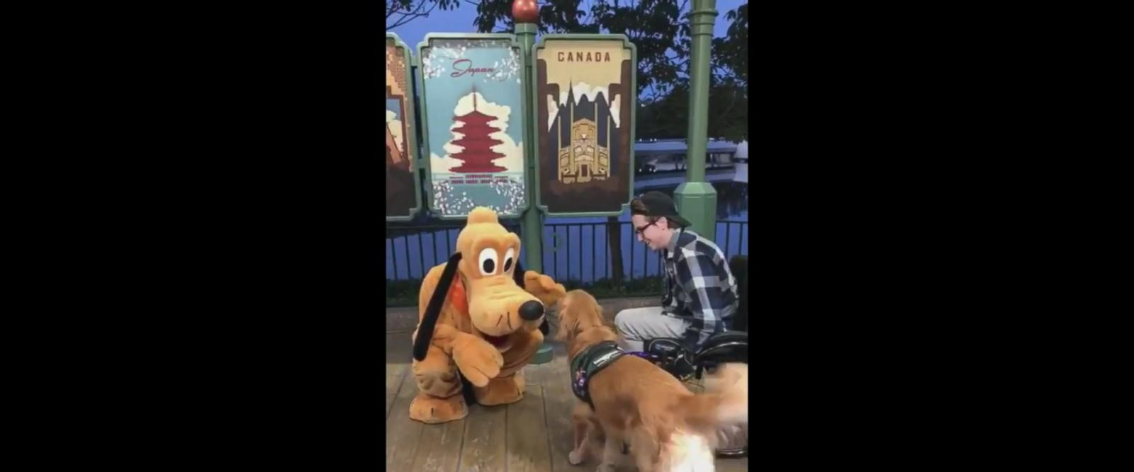 "VIDEO: Dog who has a stuffed Pluto at home meets the ""real"" one"