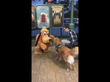 WATCH:  Dog who has a stuffed Pluto at home meets the