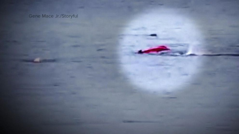New video captures kayaker's close encounter with shark in California's Monterey Bay