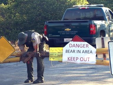 Bear Claws Through Tent, Slashes Camper in Middle of Night