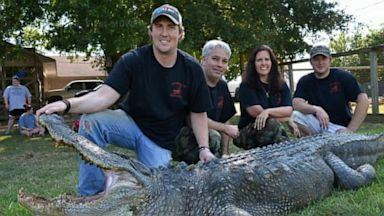 PHOTO: A 741-pound alligator sets a new record.