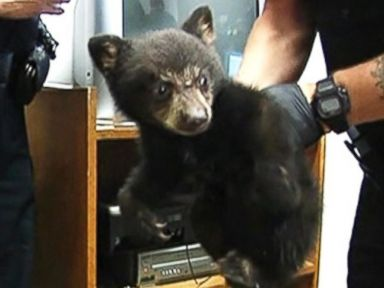 Why It's a Good Idea to Leave Black Bear Cubs in the Woods