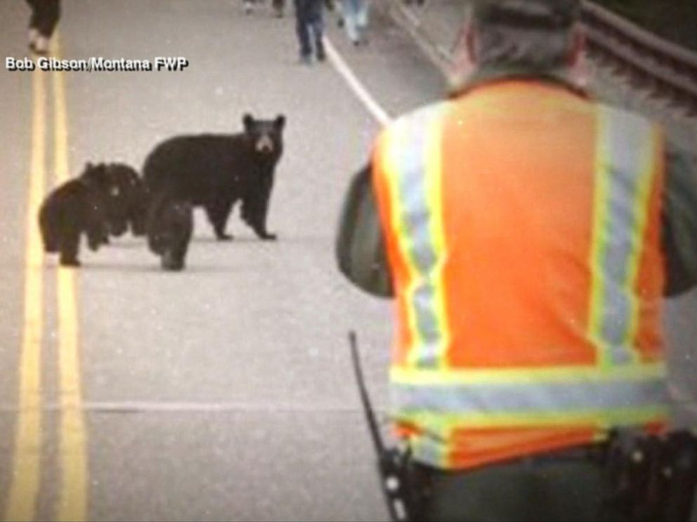 PHOTO: A bear family chased tourists at Yellowstone National park.