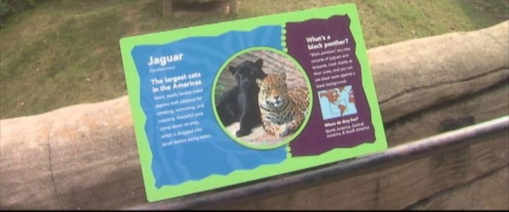 PHOTO: A 3-year-old boy was injured after he fell approximately 15 feet into a jaguar pit.