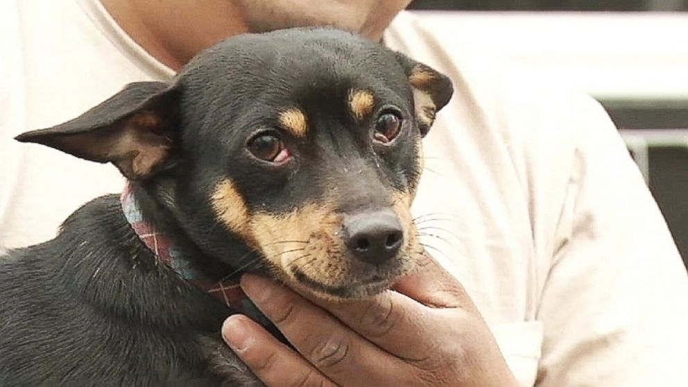 PHOTO: Postal Service says an unleashed dog is threatening the safety of the mail carrier.