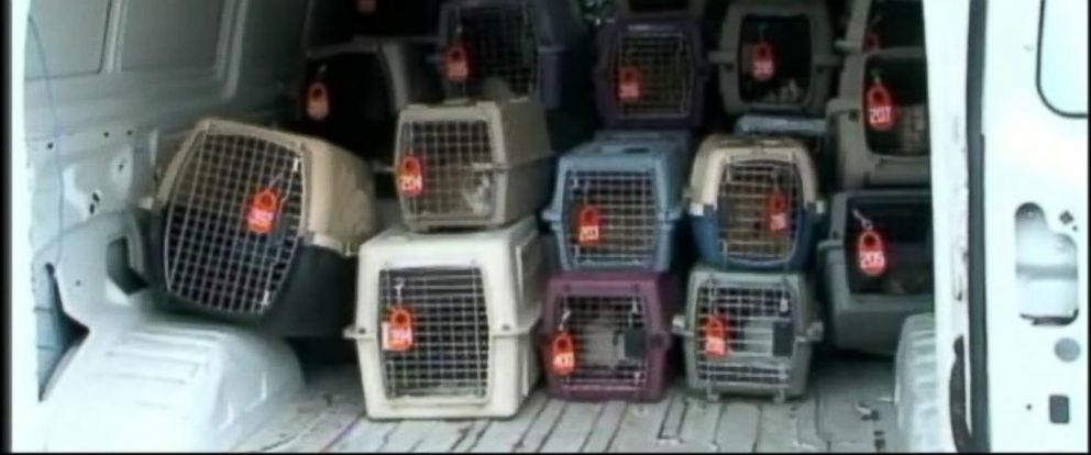 PHOTO: Over 100 cats rescued from a home in Houston this week.