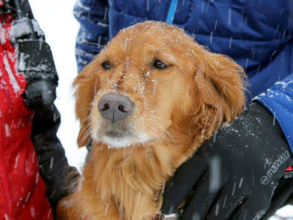 PHOTO: Recco, a rescue dog with the Copper Mountain Ski Patrol.