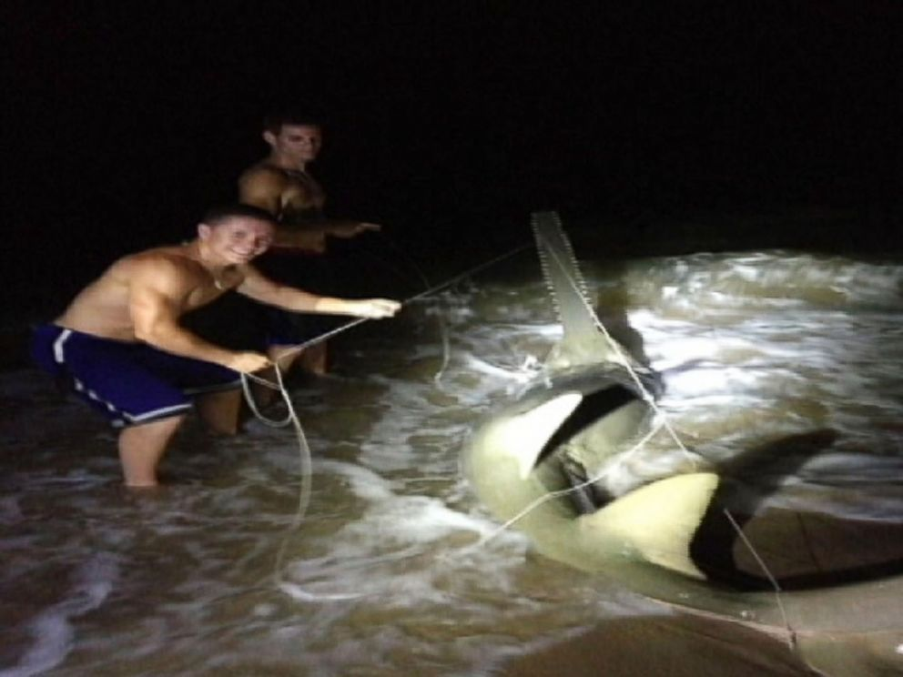 PHOTO: Dustin Richter caught a rare sawfish at Boynton Beach Inlet on May 25, 2014.