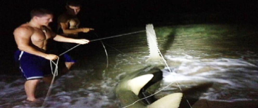 PHOTO: Dustin Richter caught a rare sawfish at Boynton Beach Inlet on May 25, 2014.