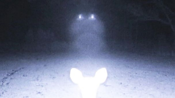 PHOTO: Eerie lights illuminate a group of deer in a wooded area in Mississippi.