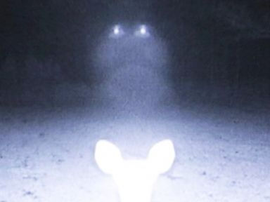 World UFO Day: Is the Truth Out There?